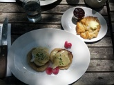 Brisket Benny and a scone in a shaded back garden patio