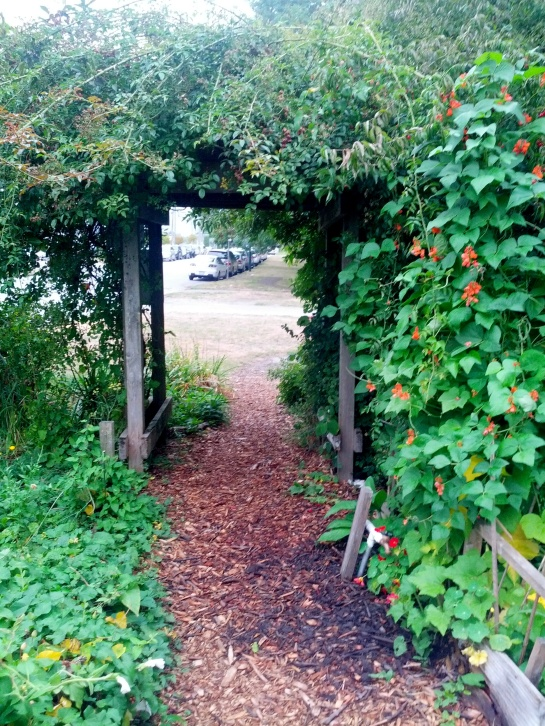 Cottonwood Garden entrance trellis